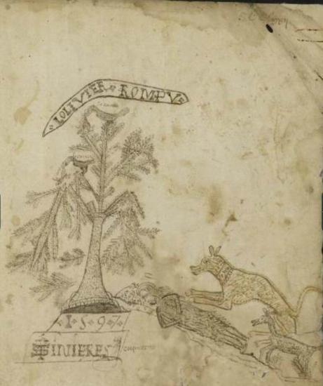 1597 Gel des oliviers à Cournonterral